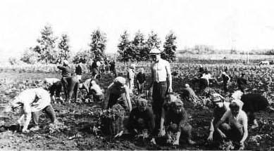Работник на ферму / Работа в Европе